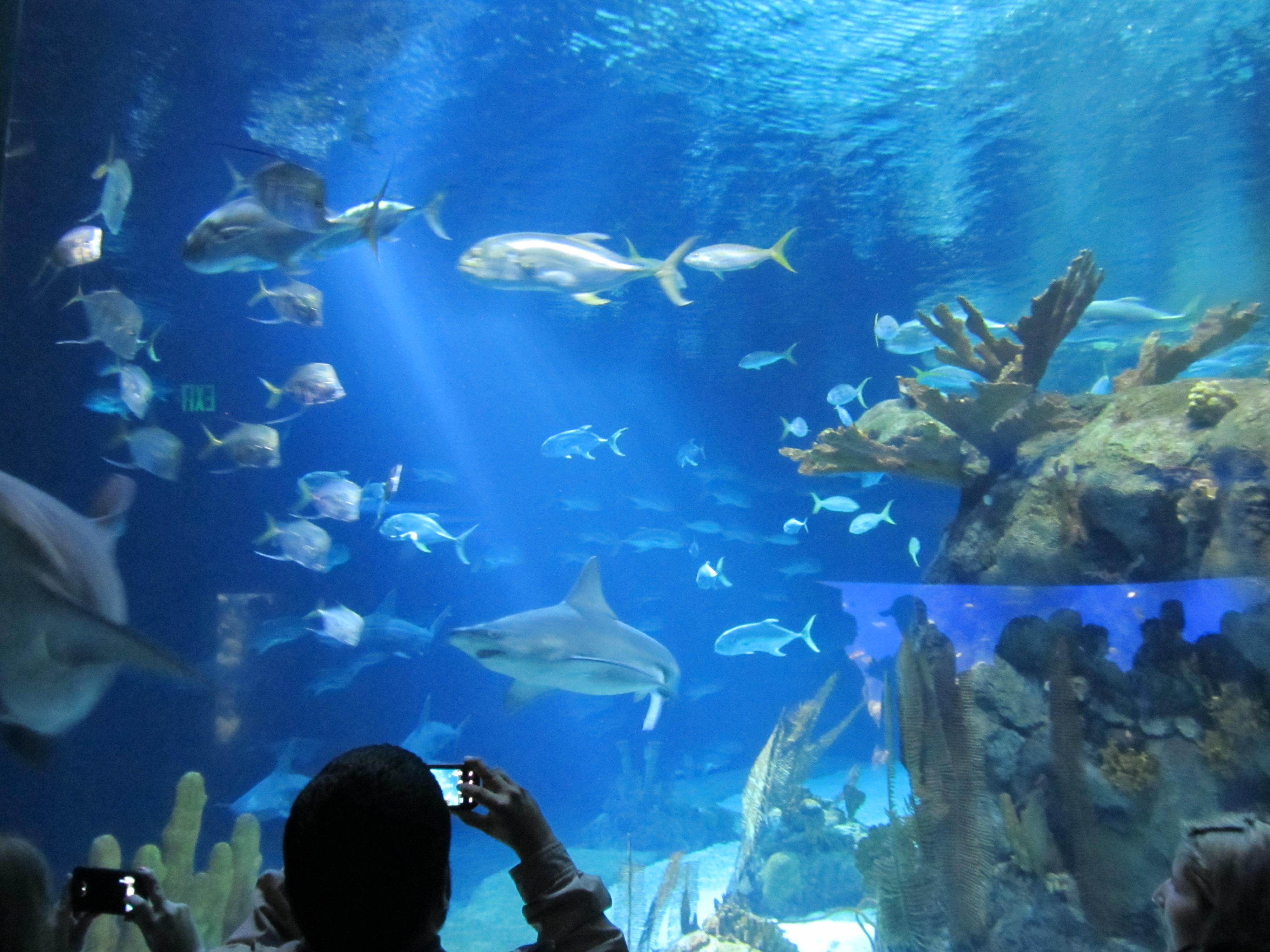 Omaha S Henry Doorly Zoo And Aquarium Thegreentreeischirping