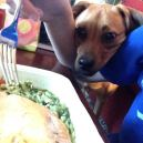He can be a very aggressive beggar!