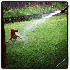 Fun with the hose!